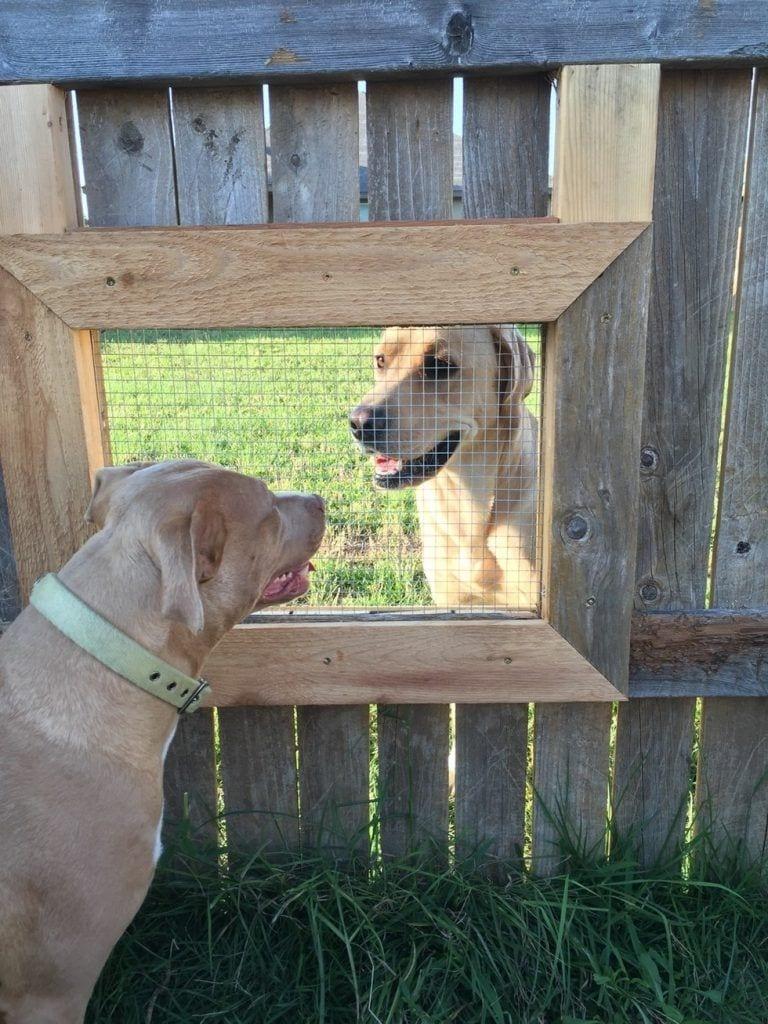 ventanas-perro3