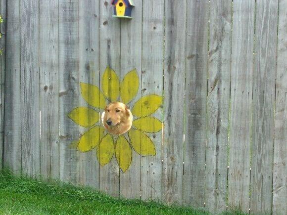 ventanas-perro4