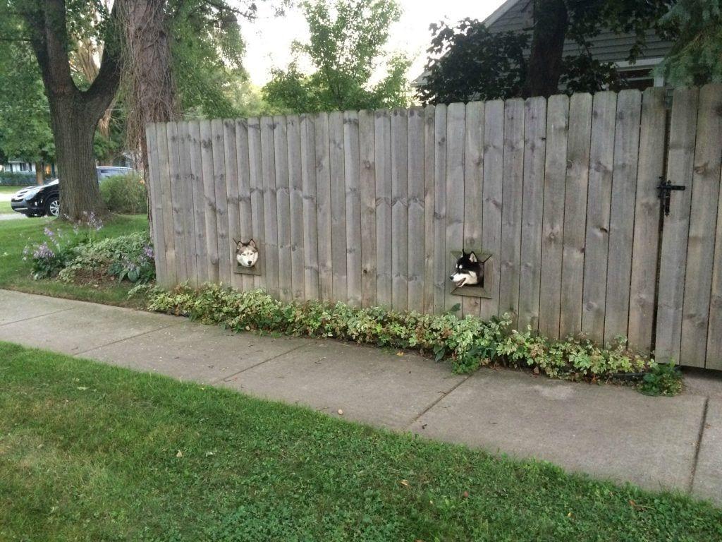 ventanas-perro7
