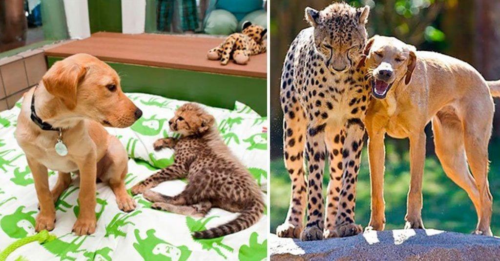 animales creciendo juntos dest