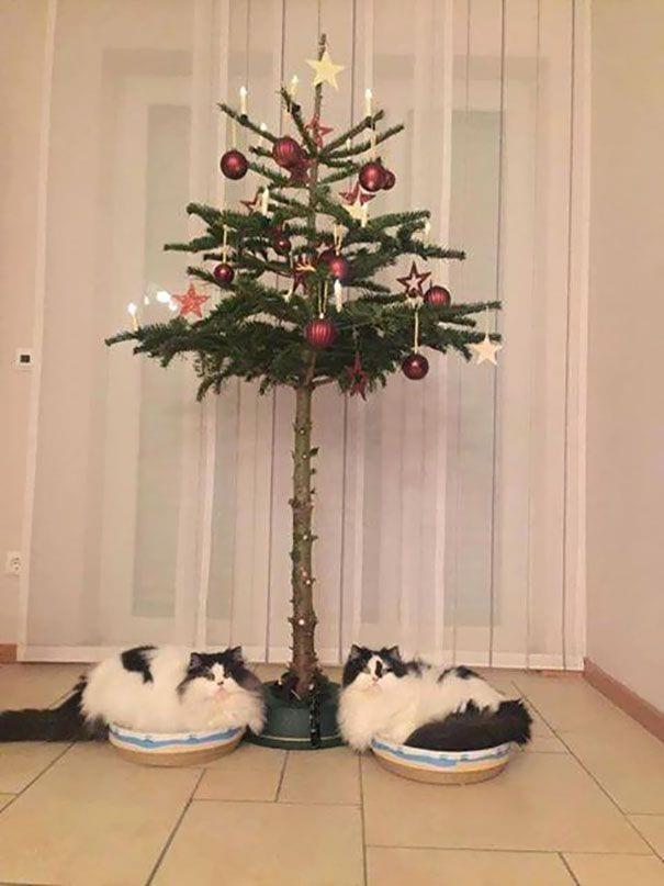 ejemplos-proteccion-arboles-navidad3