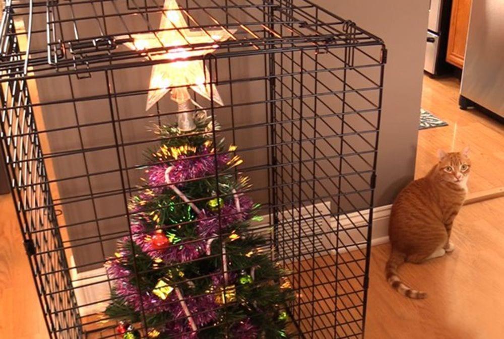 ejemplos proteccion arboles navidad8 destacada
