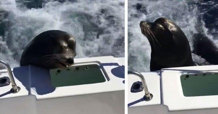 foca pide comida dest2