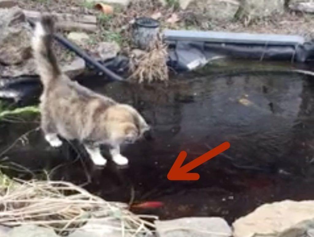 gato hielo peces destacada