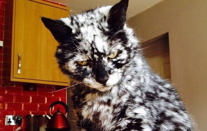 gato pelaje destacada