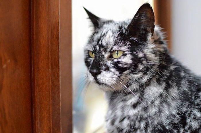 Gato-PIEL-rara-bonito