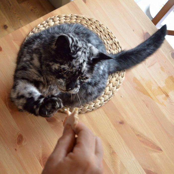 Gato-PIEL-rara-bonito1