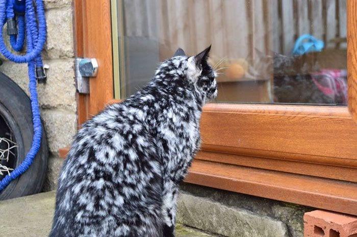 Gato-PIEL-rara-bonito2