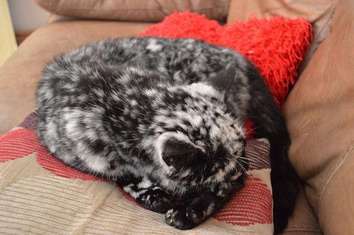 gato-piel-rara-bonito3