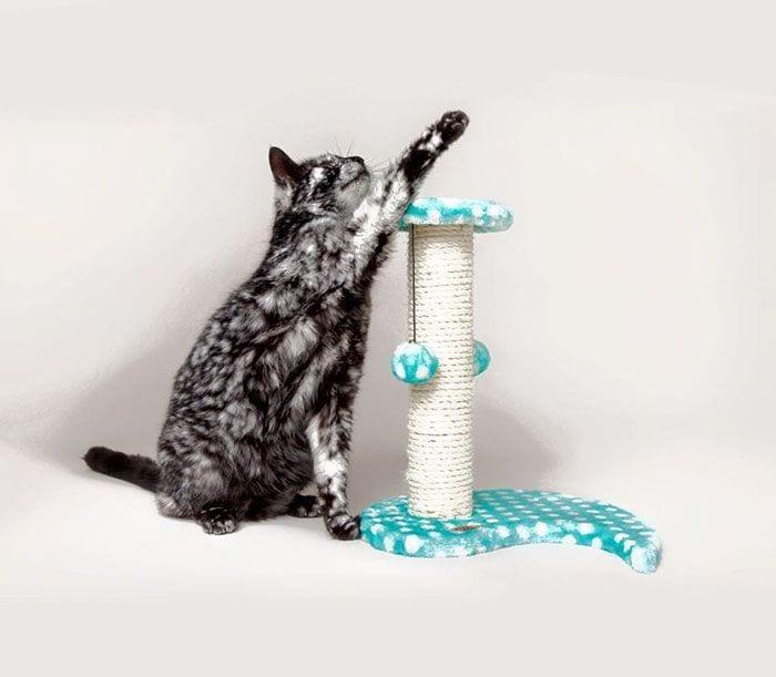 Gato-PIEL-rara-bonito4