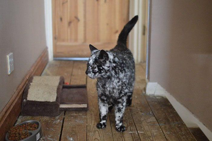 Gato-PIEL-rara-bonito5