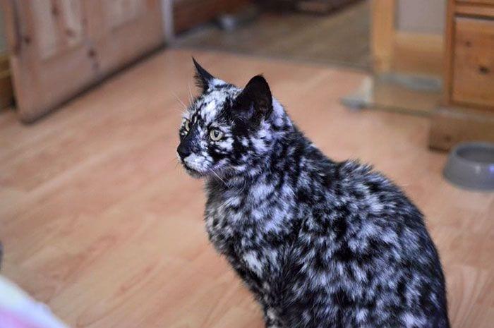 Gato-PIEL-rara-bonito6