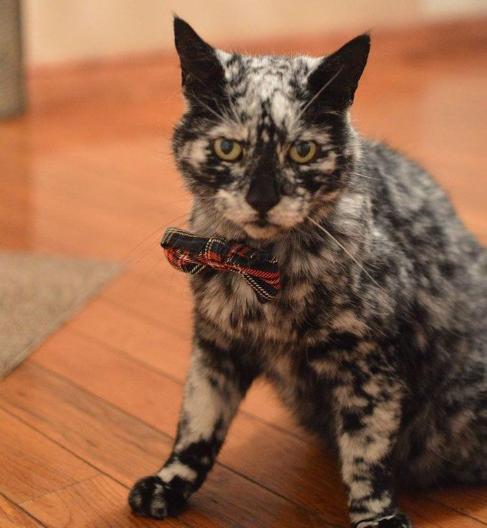 gato-piel-rara-bonito7
