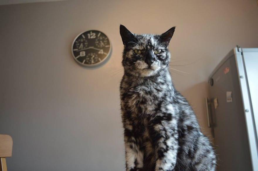 Gato-PIEL-rara-bonito8