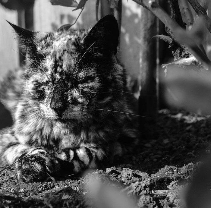 Gato-PIEL-rara-bonito9