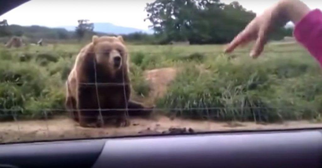 oso saluda dest