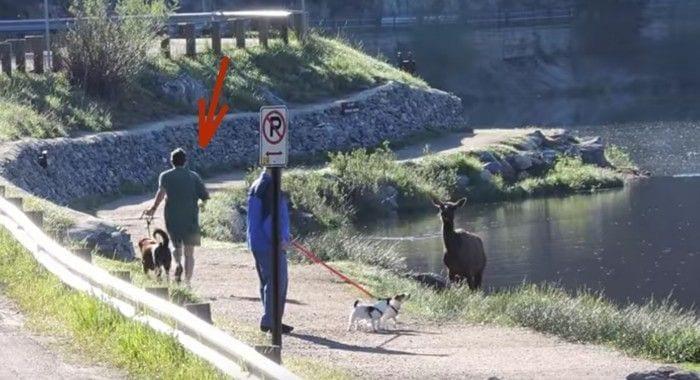 perro paseando alce destacada