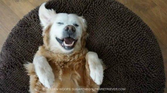 perro-siesta-casa-ajena1