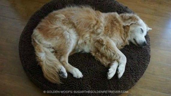 perro-siesta-casa-ajena2