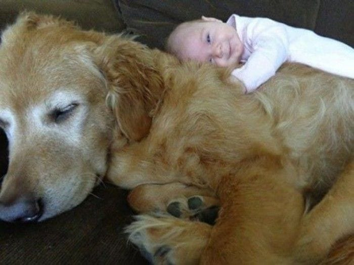 perro siesta casa destacada