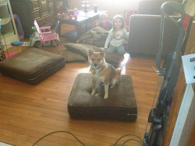 perros-curiosos10
