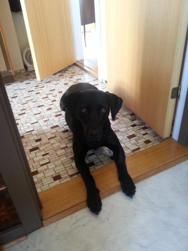 perros-curiosos11