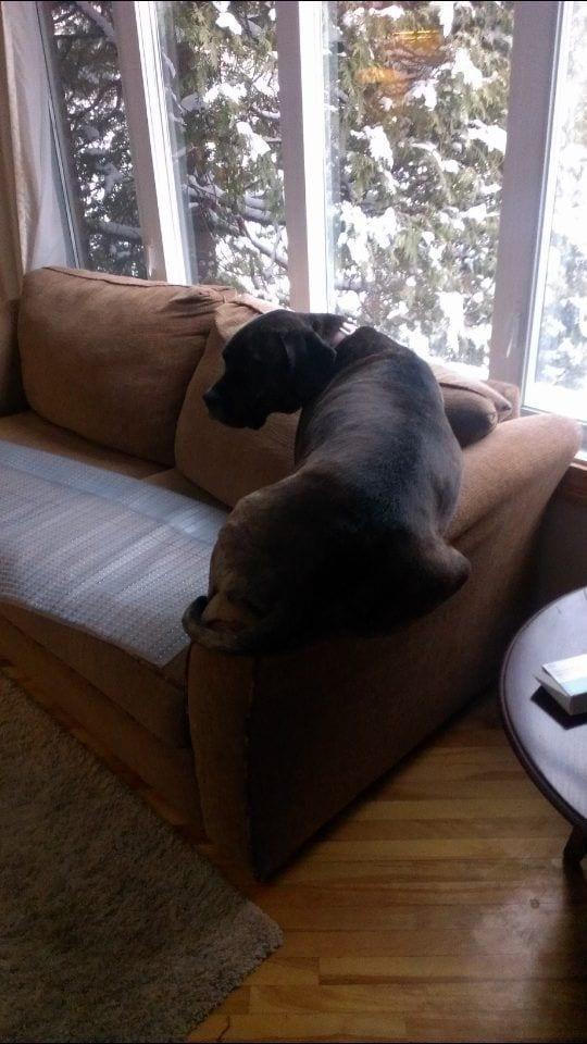 perros-curiosos14