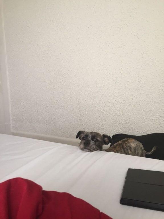 perros-curiosos8