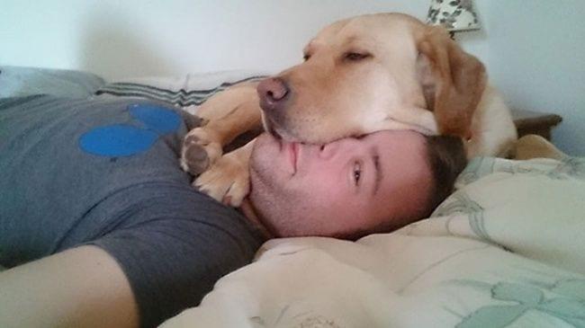 perros-no-respetan-siesta1
