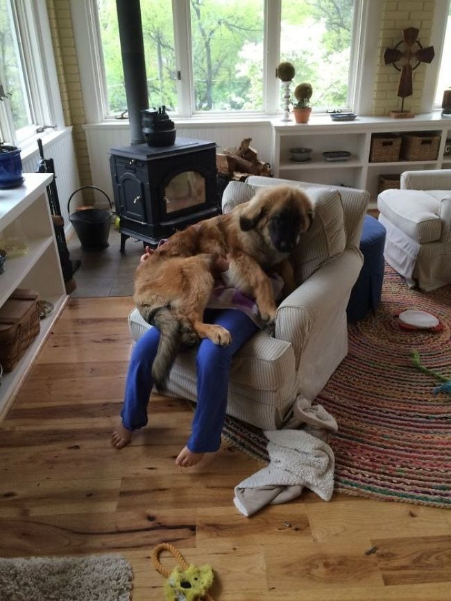 perros-no-respetan-siesta13