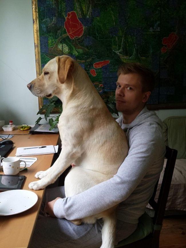 perros-no-respetan-siesta14