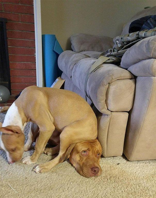 perros-no-respetan-siesta18