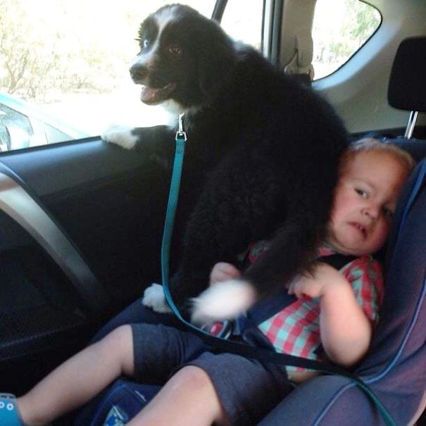perros-no-respetan-siesta19