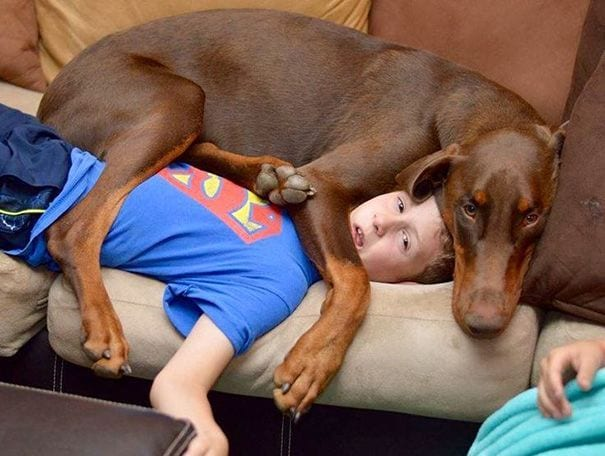 perros-no-respetan-siesta4
