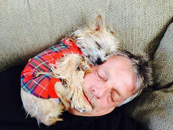 perros-no-respetan-siesta6