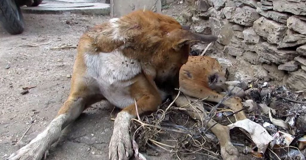rescate india perro sidney dest