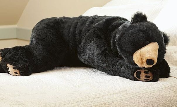 saco dormir oso destacar