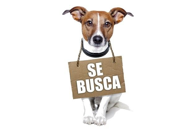 trucos-perros6