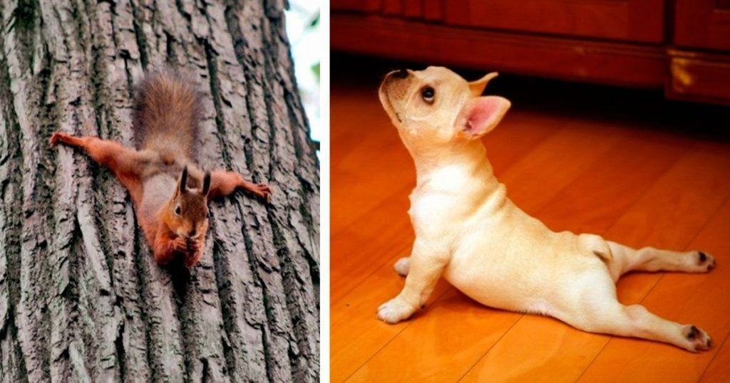 animales en forma dest