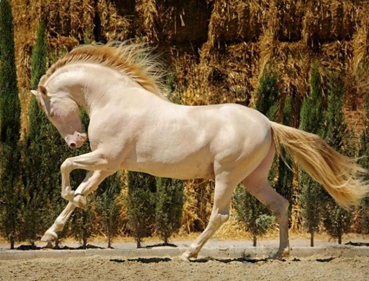 caballos-hermosos1