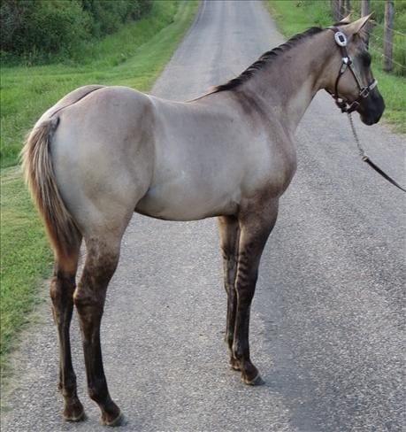 caballos-hermosos11
