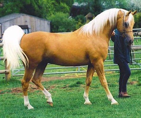 caballos-hermosos13