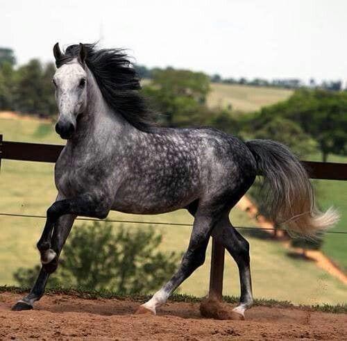 caballos-hermosos16