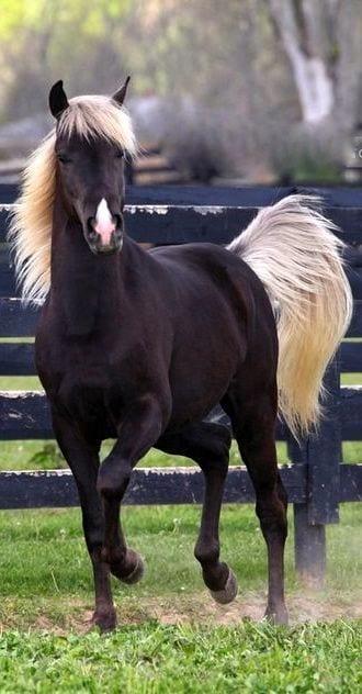 caballos-hermosos19