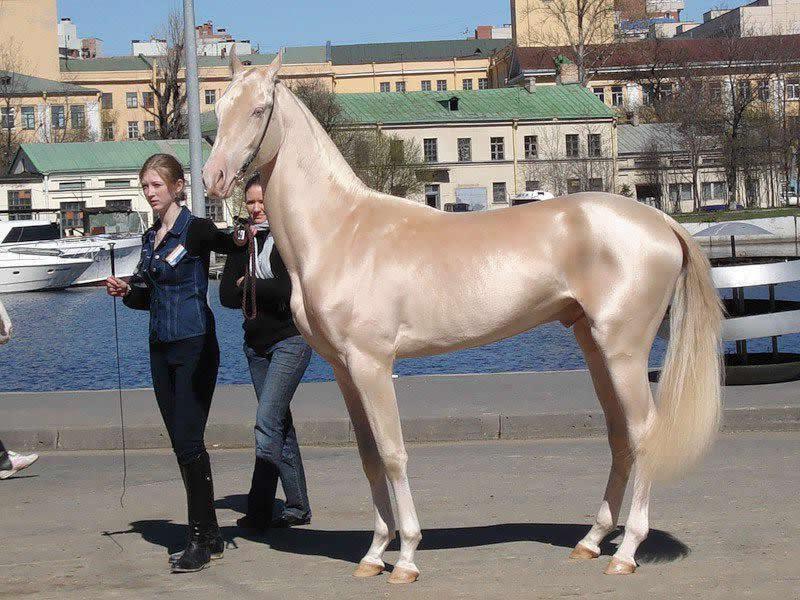 caballos-hermosos20