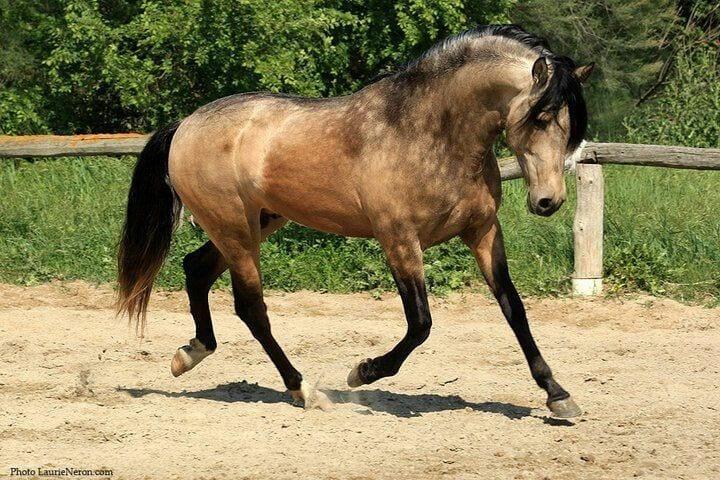caballos-hermosos21