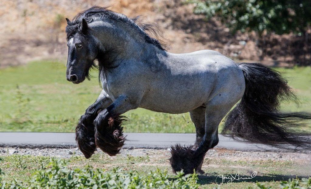 caballos-hermosos22