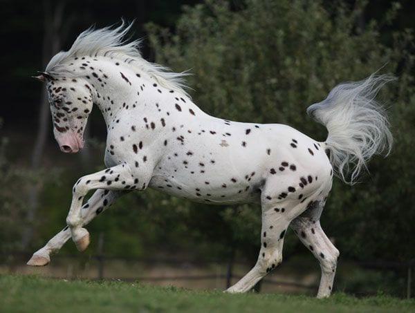 caballos-hermosos5