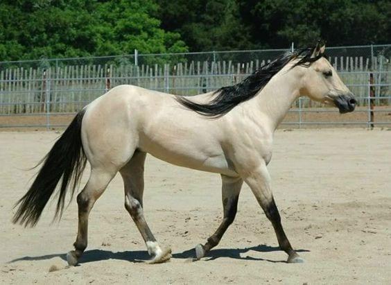 caballos-hermosos7