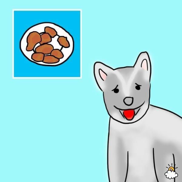 comida-sana-perros2